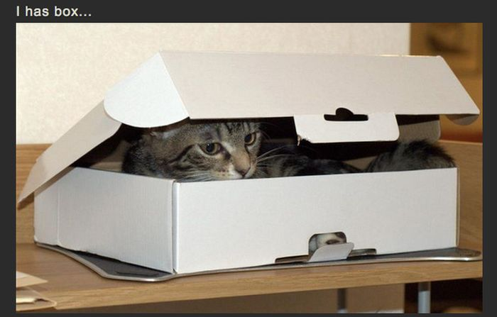 Box Invasion (4 pics)