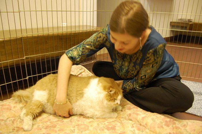difference between pet scan and cat scan