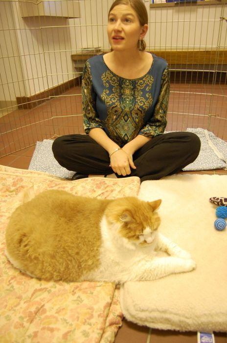 mini melissa cat