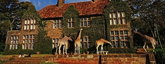 Giraffes Came for Breakfast (7 pics)