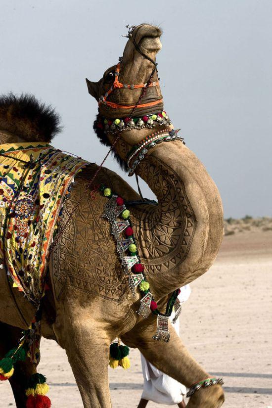 Amazing Camel Hair Art (14 pics)
