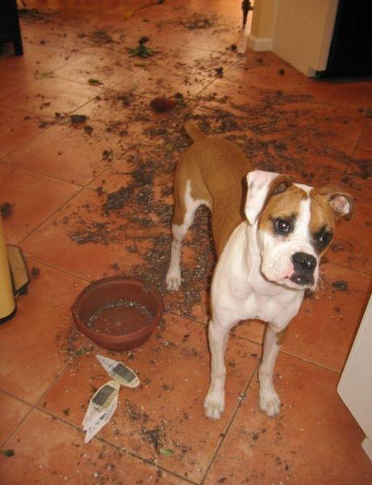 Pets Gone Wild. Part 2 (45 pics)