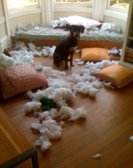 Pets Gone Wild. Part 2 (45 pics)