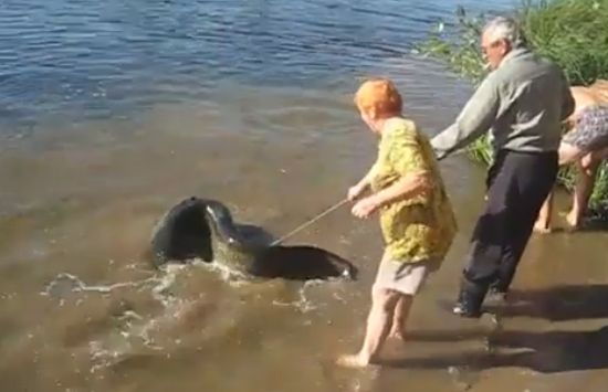 Awesome Russian Catfish Fishing