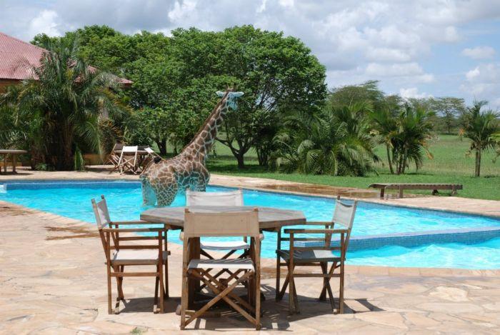 Giraffe Swimming in a Pool (6 pics)