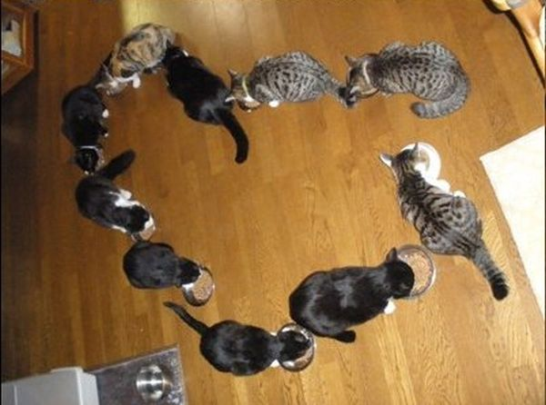 How to Have Fun with Cats (14 pics)