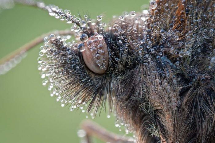 Close-up Photos of Colorful Butterflies (50 pics)