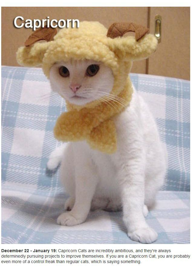 Zodiac Cats (12 pics)
