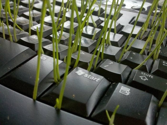 Great Use of an Old Keyboard (8 pics)