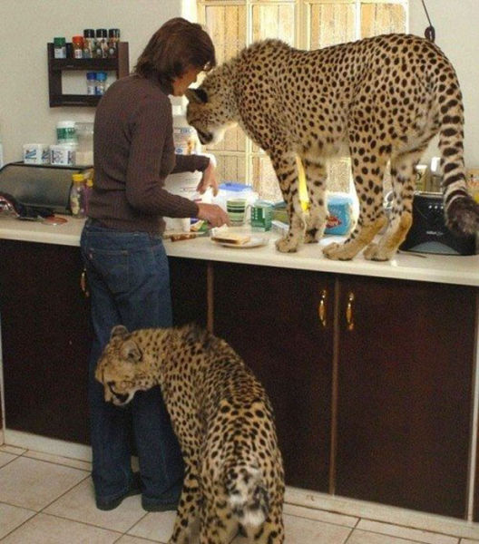 Women Doing Crazy and Funny Things (48 pics)