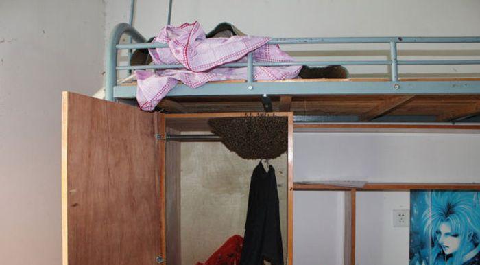 Dorm Room Guests (3 pics)