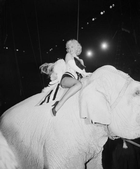 Marilyn Monroe Photos (95 pics)