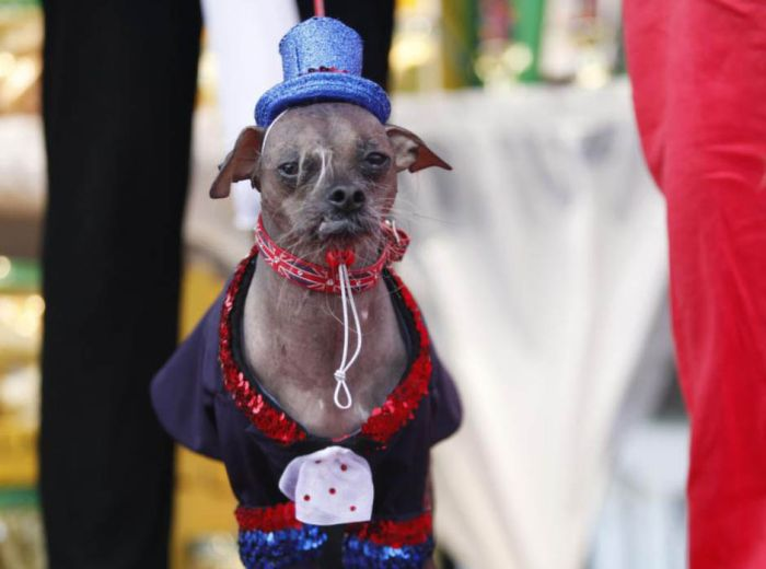 The World's Ugliest Dog 2012 (16 pics)