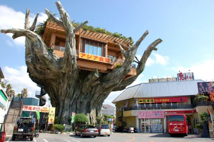 Okinawa's Banyan Treehouse Restaurant (6 pics)