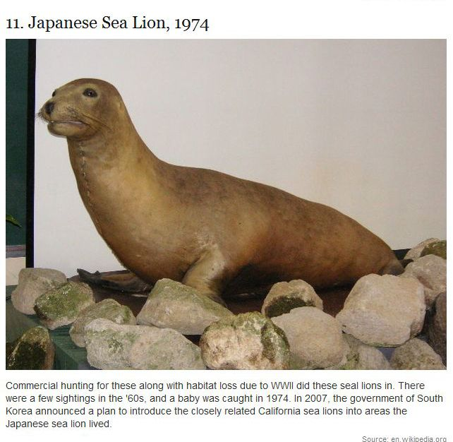 Animals That Became Extinct In Our Lifetime (17 pics)