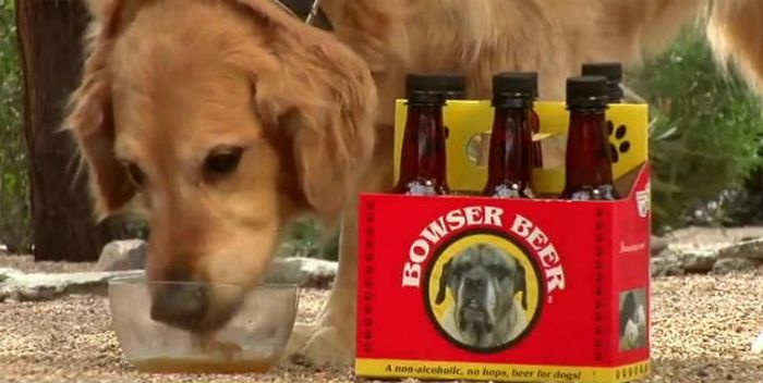 Bowser Beer for Dogs (8 pics)