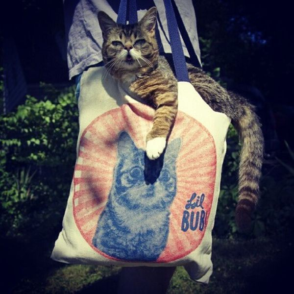Lil Bub Cat (39 pics)