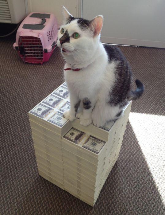 Cats and Cash (64 pics)