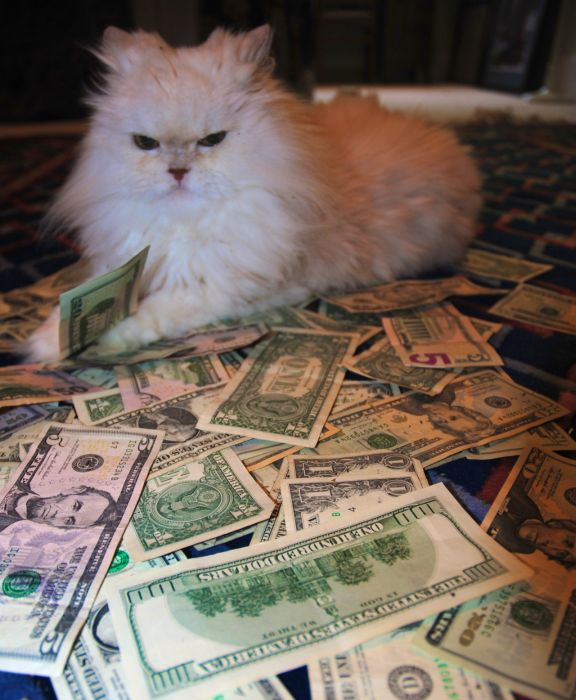 Cats and Cash (64 pics)