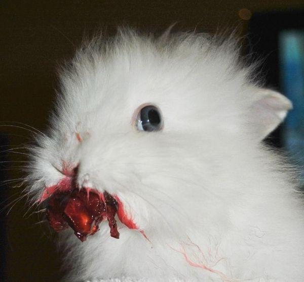 Rabbit and Cherry (2 pics)