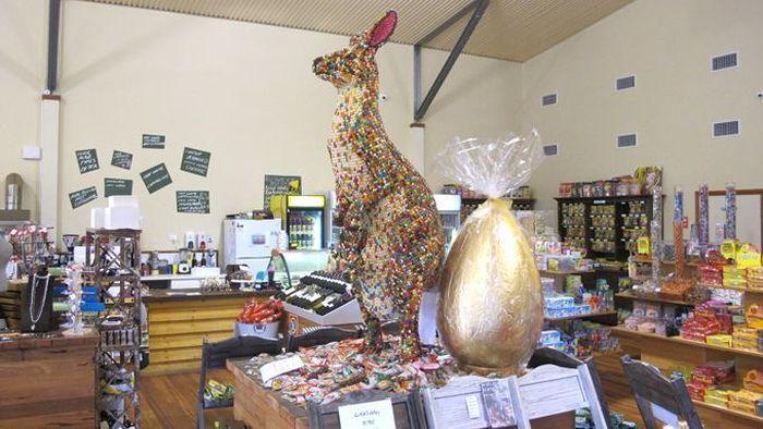 Sweet Kangaroo (7 pics)