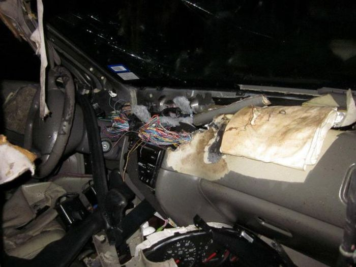 Busted for Vandalism (9 pics)