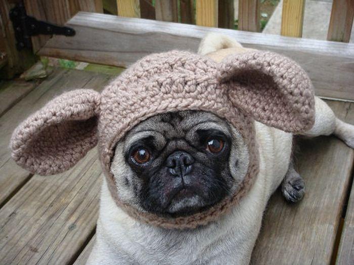 Sweethoots, Cute Pug Hats (50 pics)