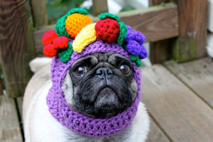 Sweethoots, Cute Pug Hats (50 pics)