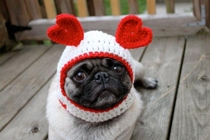 Perrito Con gorritos de lana