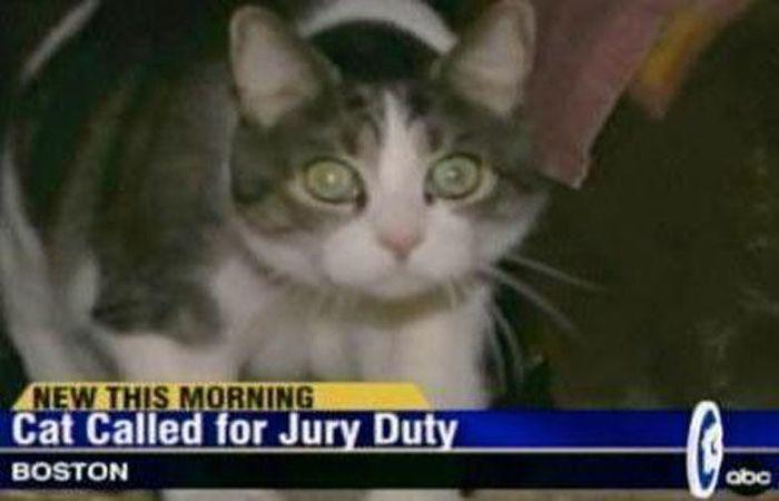 Weird News Headlines (20 pics)