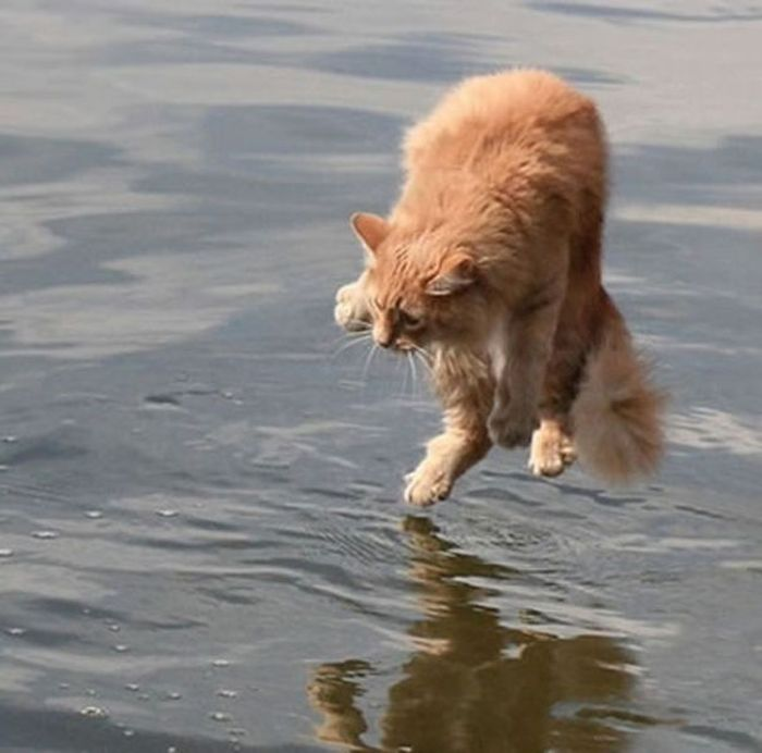 Cat Photos Taken at the Right Moment (32 pics)