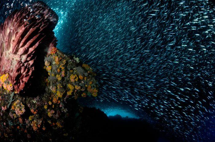 Sardines (14 pics)