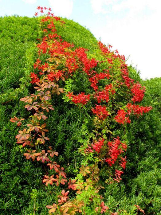 Beautiful Garden (34 pics)