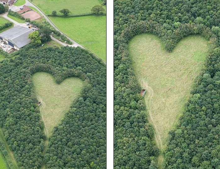 Heart of Oaks (7 pics)