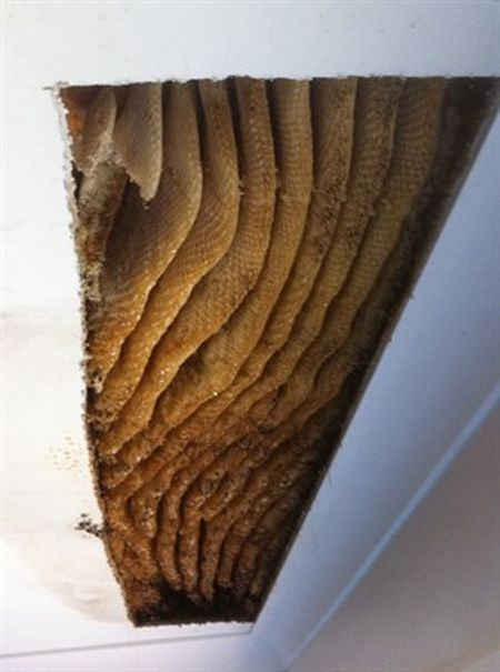 Honey-Filled Ceiling (3 pics + video)