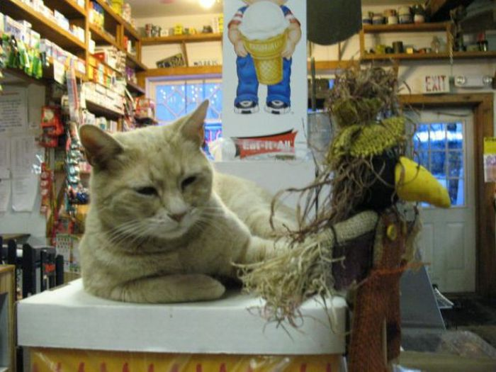 Mayor of the Town of Talkeetna (32 pics)