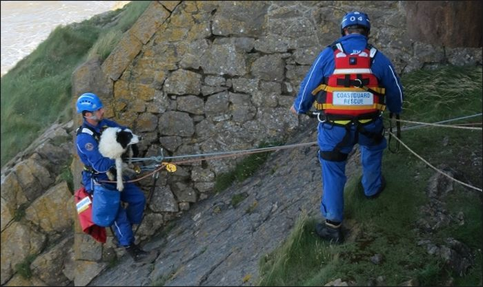 Coastguards Save Stranded Dog (7 pics)