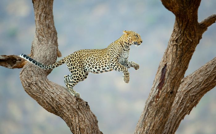 National Geographic Traveler Photo Contest 2012 (40 pics)