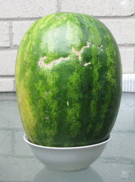 Smiling Watermelon (4 pics)