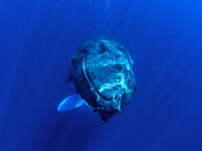 Diving with Whale (12 pics)