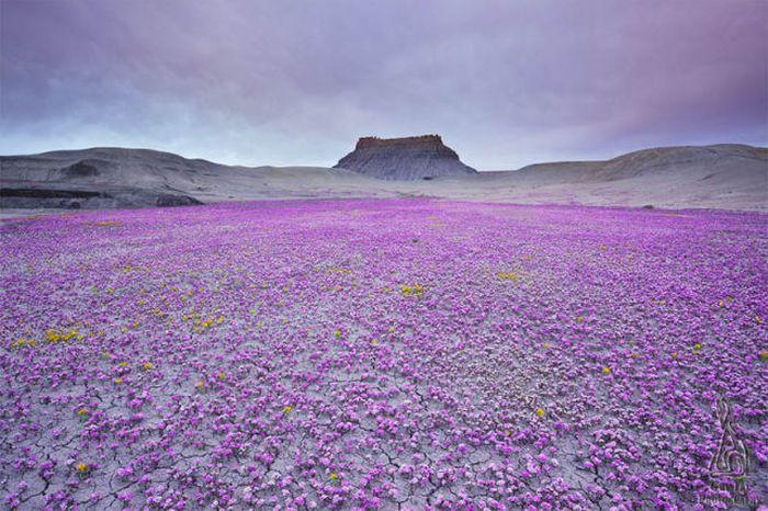 Amazing Photos (48 pics)