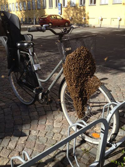 Swarm of Bees Claim Woman's Bicycle in Sweden (2 pics)