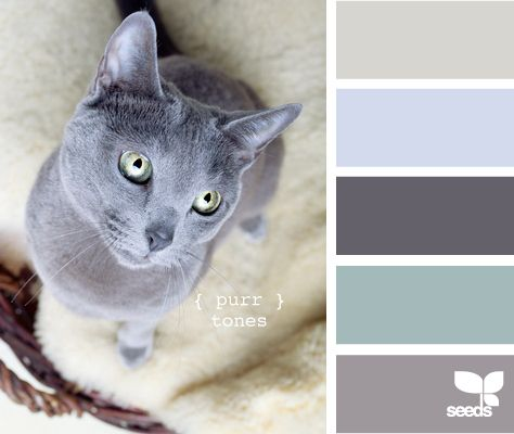 Kittenish And Puppyful Color Palettes (27 pics)