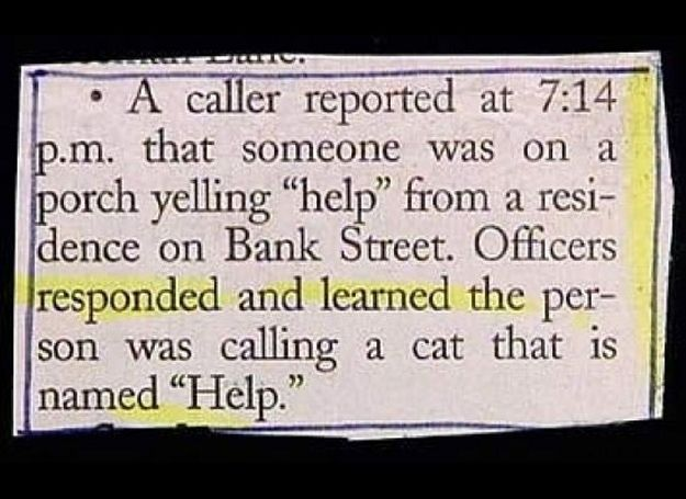 Animal-Related Police Blotters (20 pics)
