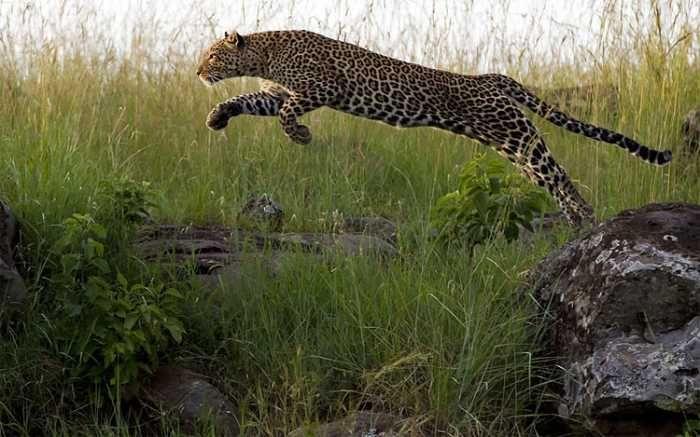 Animal Olympics by Paul Goldstein (28 pics)