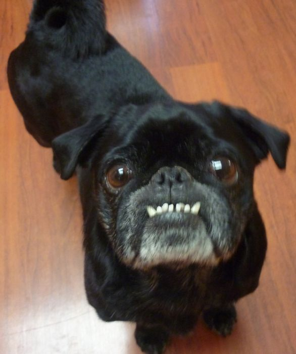 Dogs With Underbites (25 pics)