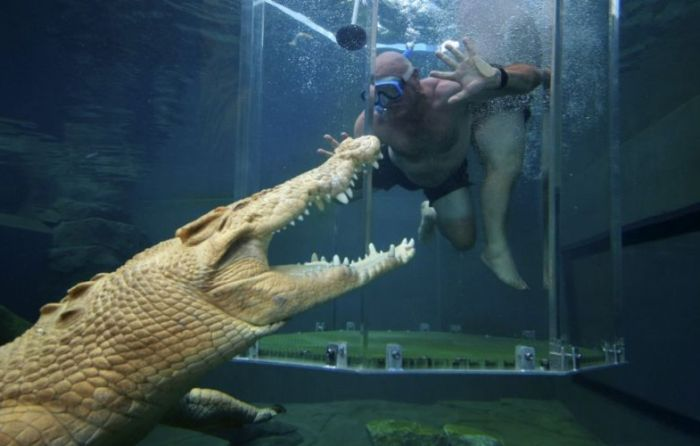 Diving with Crocodiles (6 pics)