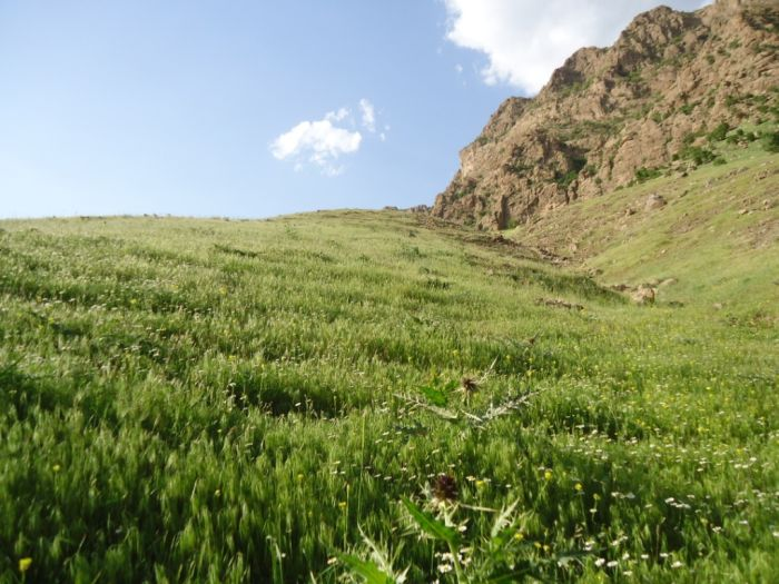 Beautiful Nature of Iraqi-Kurdistan Region (113 pics)