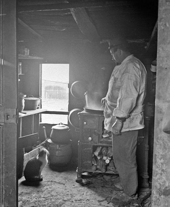 Cats at War (30 pics)