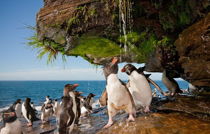 Penguins Take a Shower (6 pics)